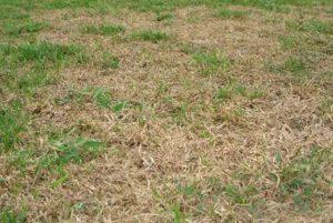 芝生の維持管理☘